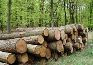 ქართული ტყე