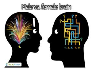 ტვინი