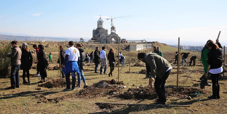 მახათას მთაზე ზეთისხილის ბაღების გაშენება დაიწყო